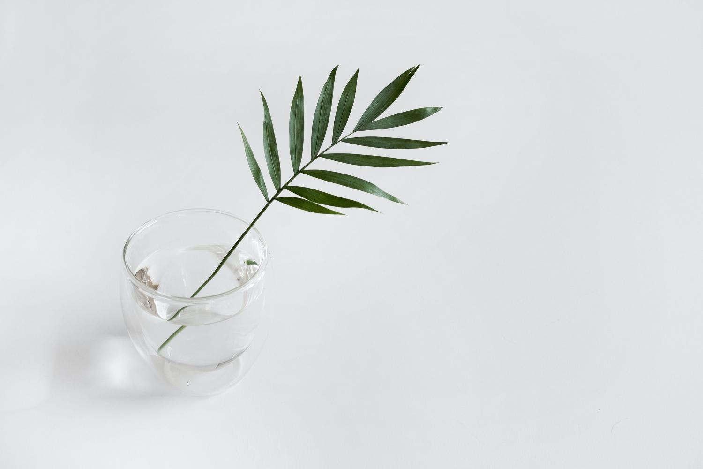 minimalism plant
